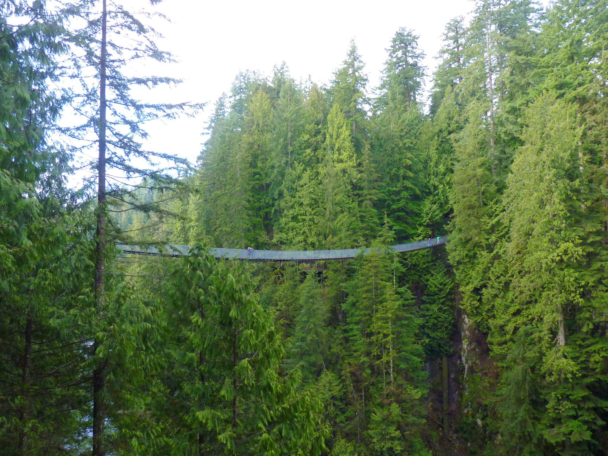 Bridge 01 Capilano Suspension Bridge Park Vancouver Canadá Mundo Indefinido