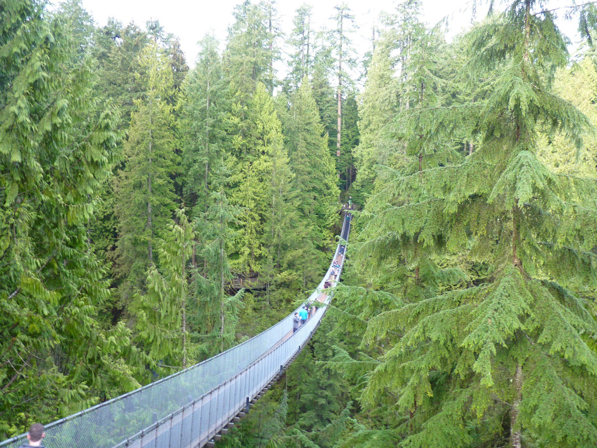 Bridge 02 Capilano Suspension Bridge Park Vancouver Canadá Mundo Indefinido