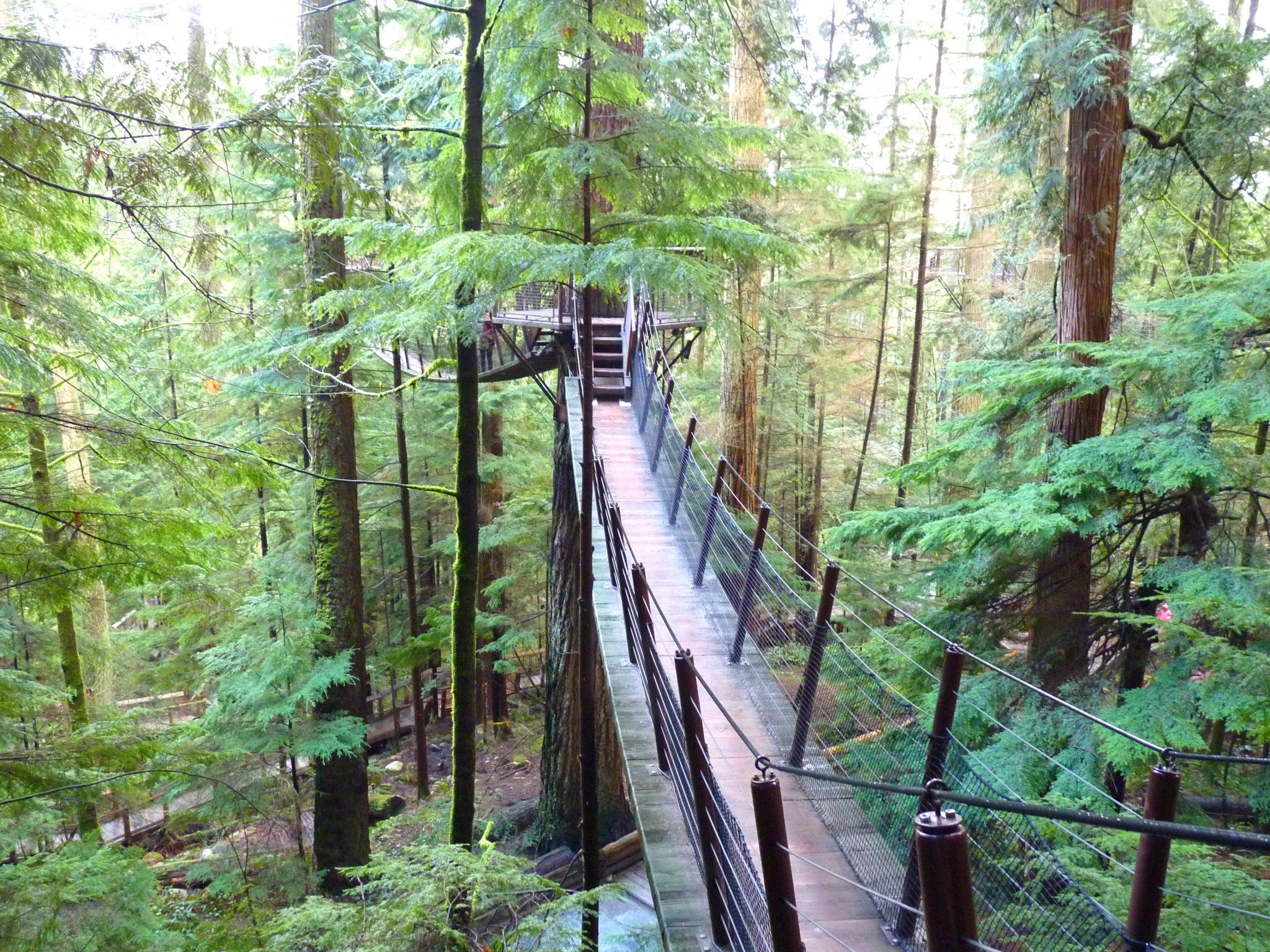 Treetops Adventure 01 Capilano Suspension Bridge Park Vancouver Canadá Mundo Indefinido
