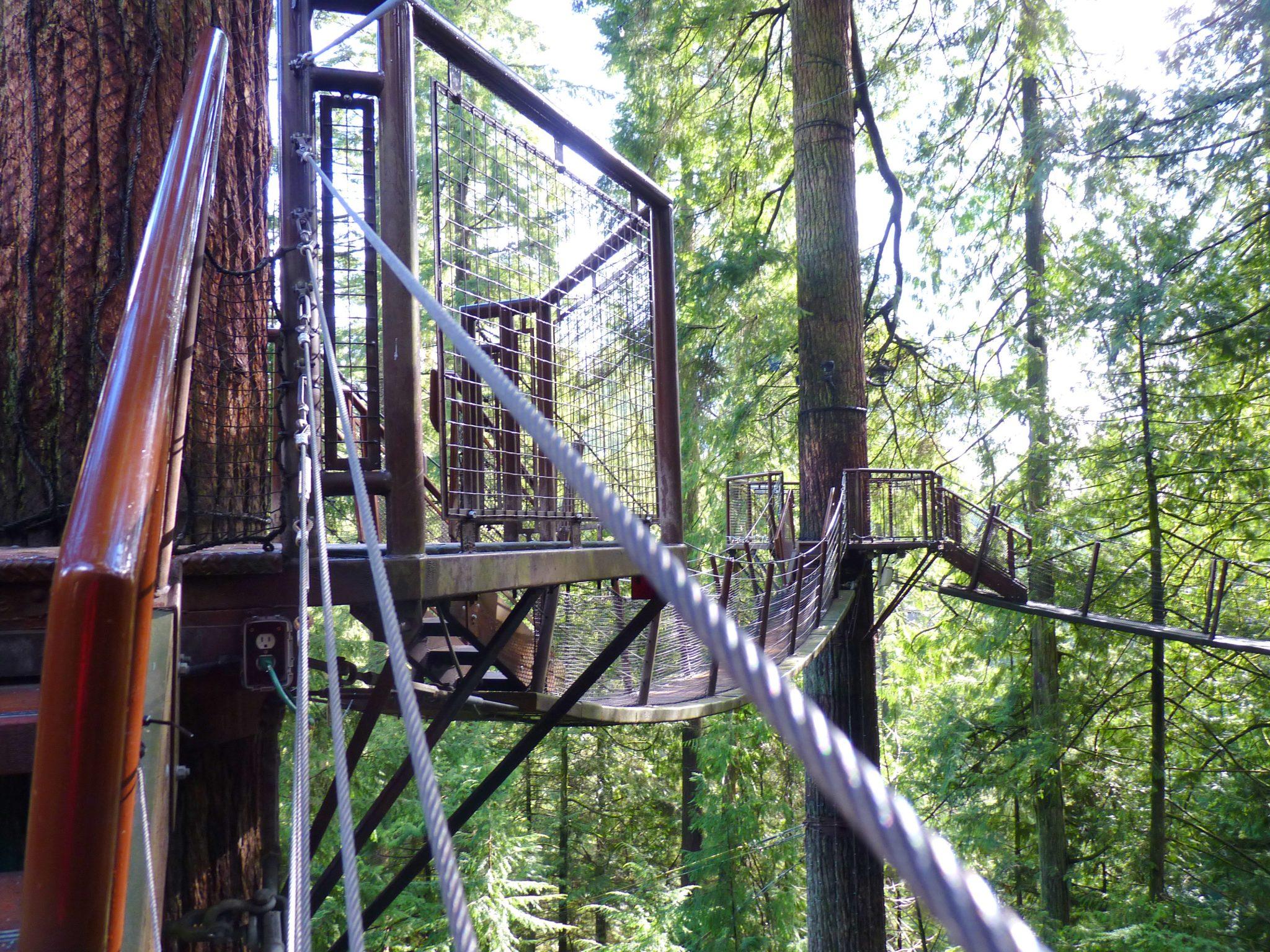 Treetops Adventure 02 Capilano Suspension Bridge Park Vancouver Canadá Mundo Indefinido