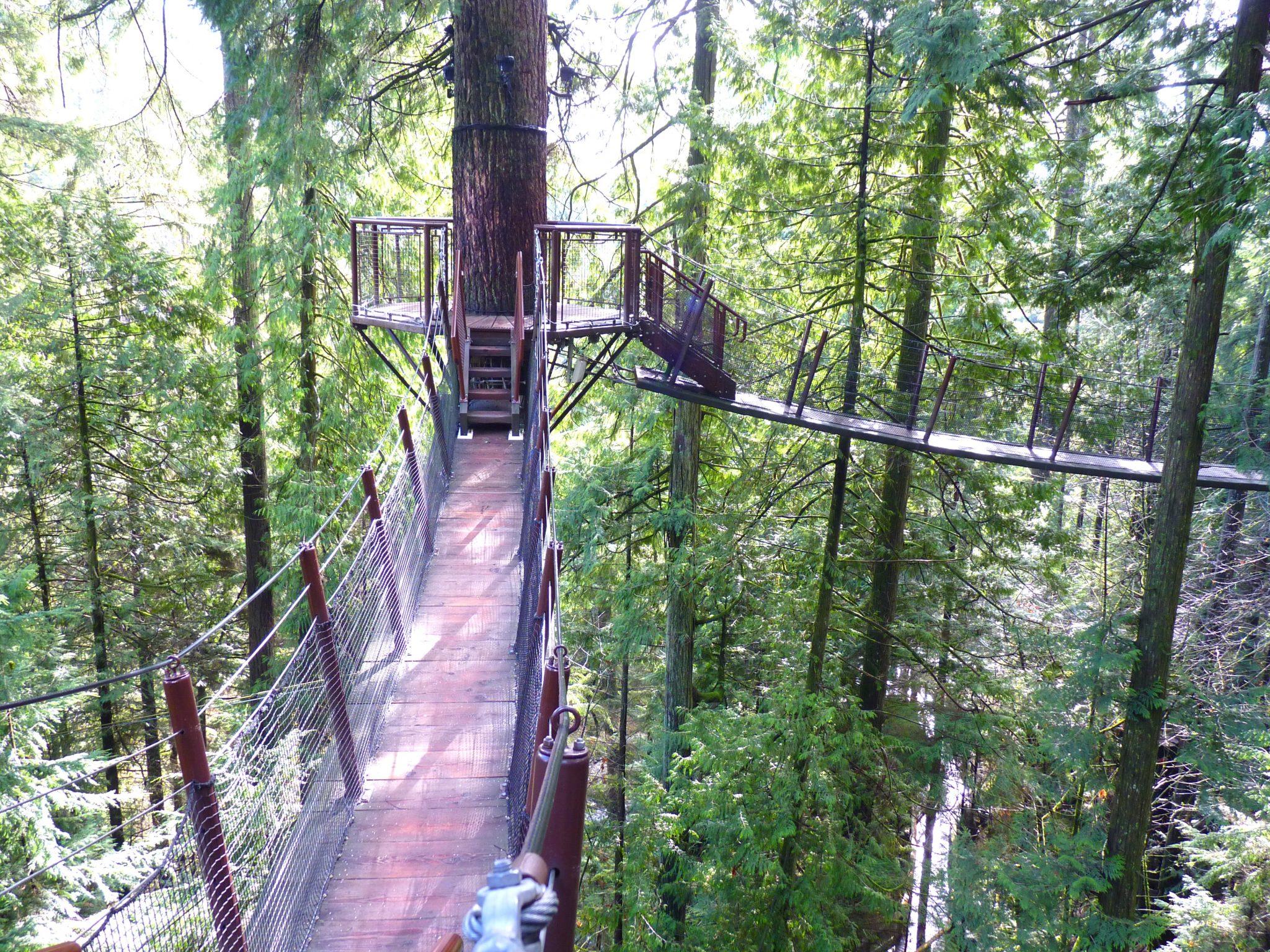 Treetops Adventure 03 Capilano Suspension Bridge Park Vancouver Canadá Mundo Indefinido