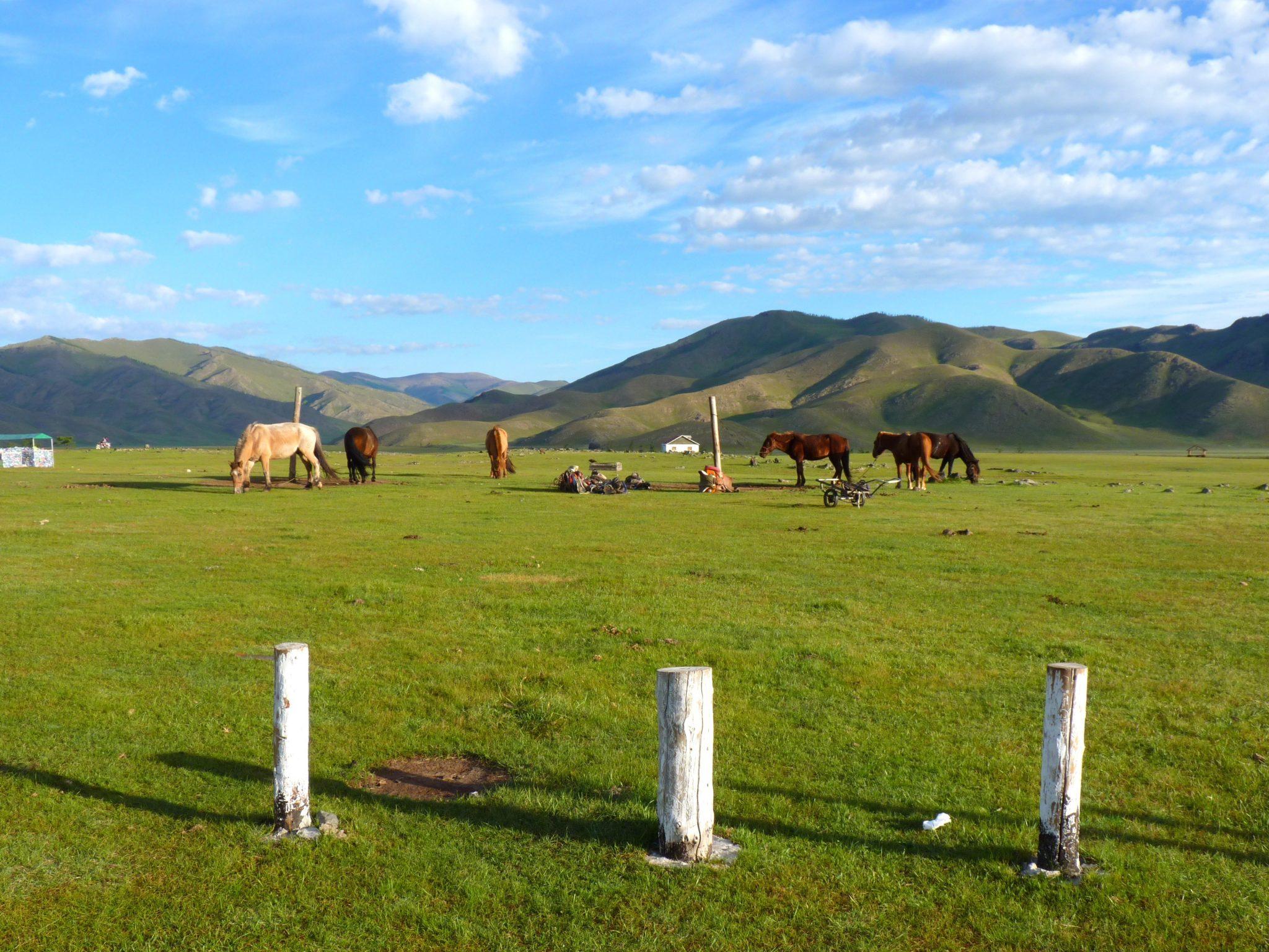 Cavalos 01 Mongólia Mundo Indefinido