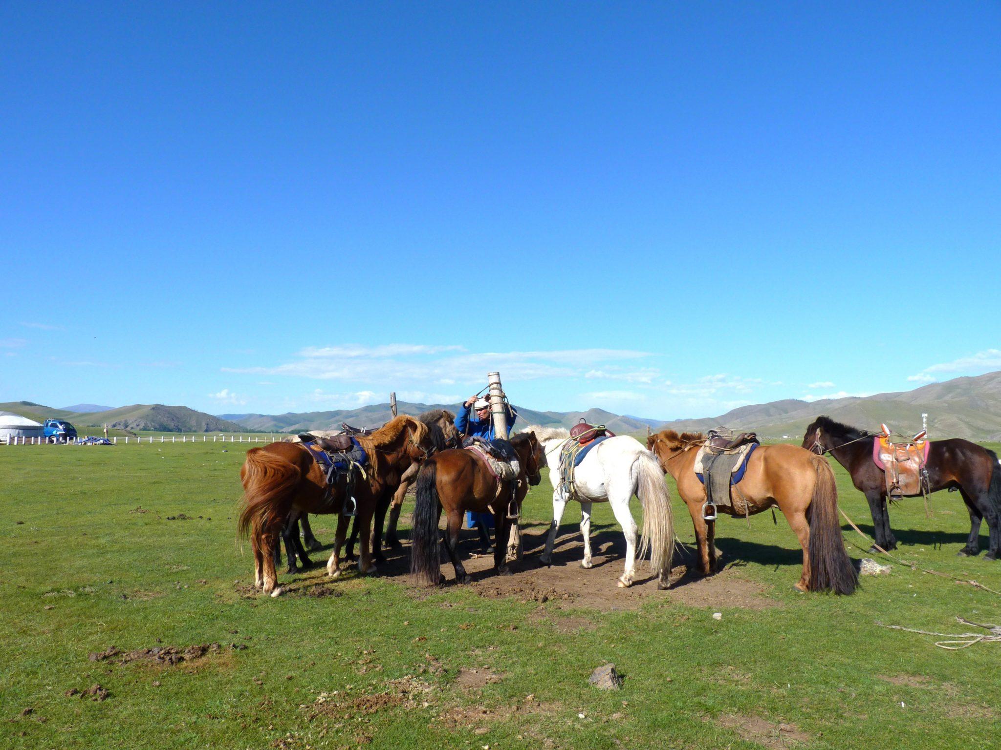 Cavalos 02 Mongólia Mundo Indefinido